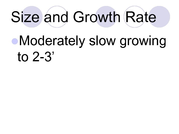 Size and Growth Rate l. Moderately to 2 -3' slow growing