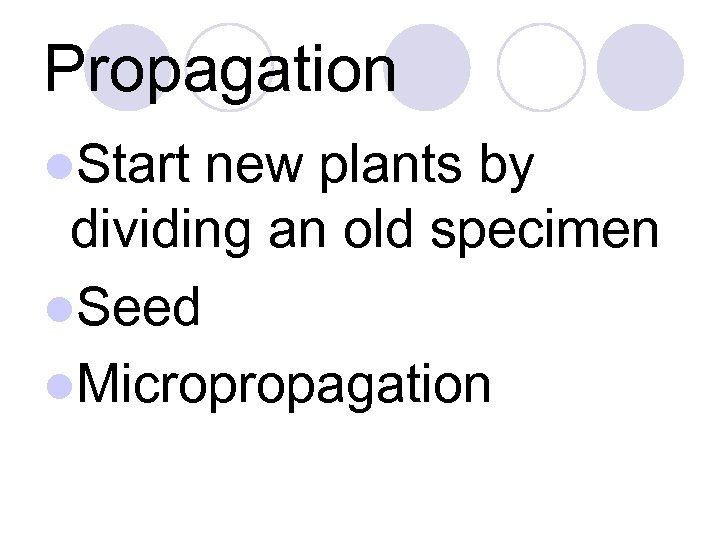 Propagation l. Start new plants by dividing an old specimen l. Seed l. Micropropagation