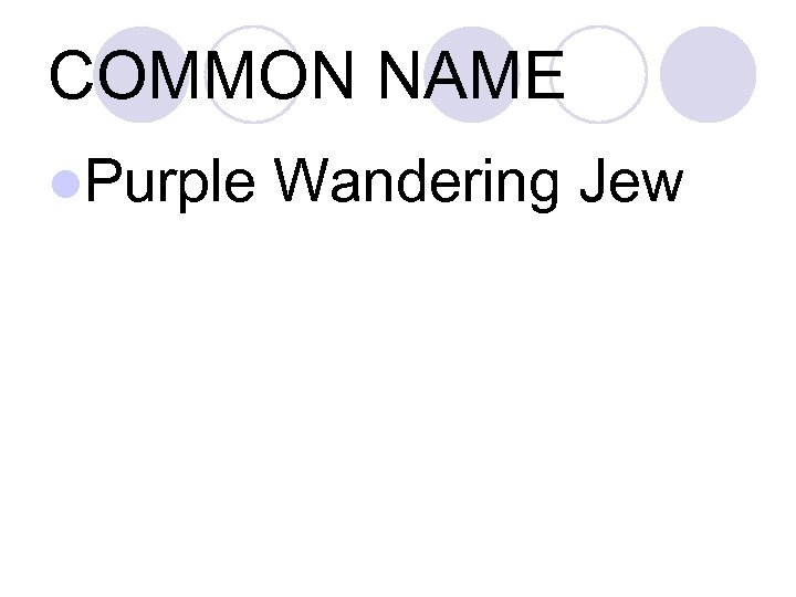 COMMON NAME l. Purple Wandering Jew