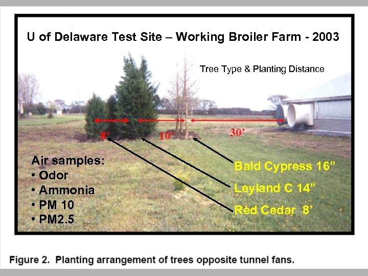 U of Delaware Test Site – Working Broiler Farm - 2003 Tree Type &