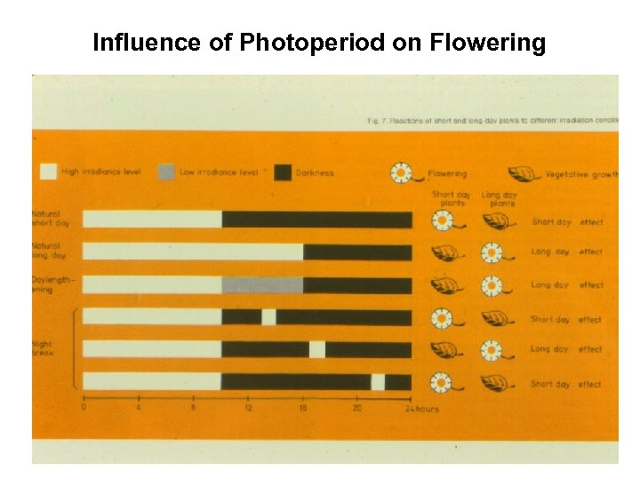 Influence of Photoperiod on Flowering