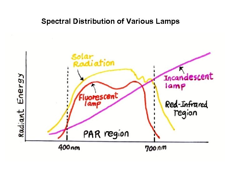 Spectral Distribution of Various Lamps