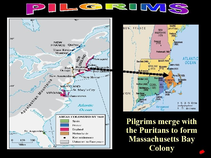 Pilgrims merge with the Puritans to form Massachusetts Bay Colony