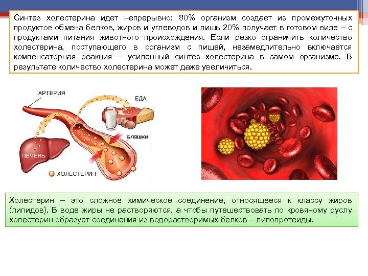 Синтез холестерина идет непрерывно: 80% организм создает из промежуточных продуктов обмена белков, жиров и
