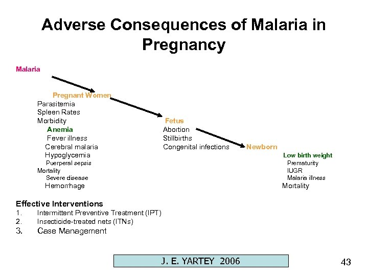 Adverse Consequences of Malaria in Pregnancy Malaria Pregnant Women Parasitemia Spleen Rates Morbidity Anemia