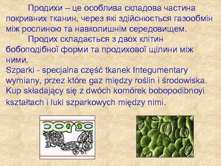 Продихи – це особлива складова частина покривних тканин, через які здійснюється газообмін між рослиною