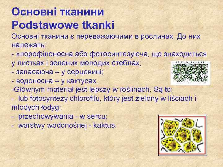 Основні тканини Podstawowe tkanki Основні тканини є переважаючими в рослинах. До них належать: -