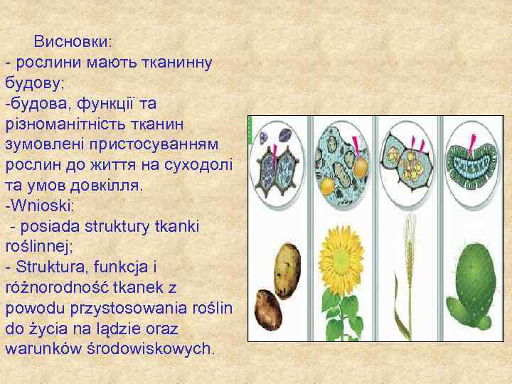 Висновки: - рослини мають тканинну будову; -будова, функції та різноманітність тканин зумовлені пристосуванням