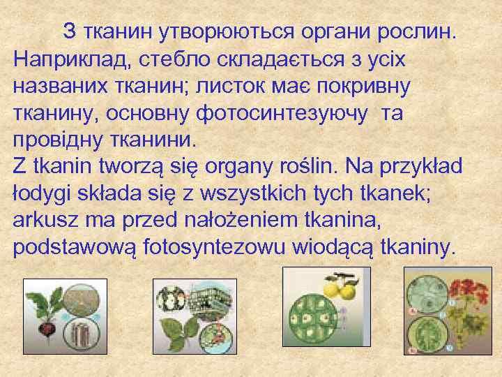 З тканин утворюються органи рослин. Наприклад, стебло складається з усіх названих тканин; листок має