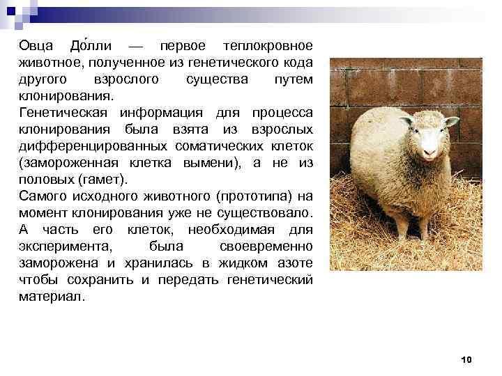 Овца До лли — первое теплокровное животное, полученное из генетического кода другого взрослого существа