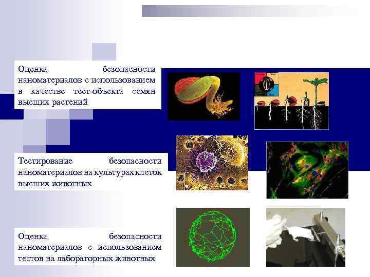 Оценка безопасности наноматериалов с использованием в качестве тест-объекта семян высших растений Тестирование безопасности наноматериалов