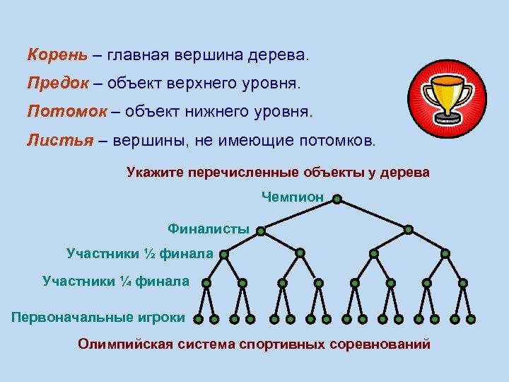 Корень – главная вершина дерева. Предок – объект верхнего уровня. Потомок – объект нижнего