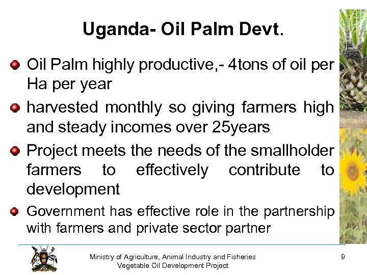 Uganda- Oil Palm Devt. Oil Palm highly productive, - 4 tons of oil per
