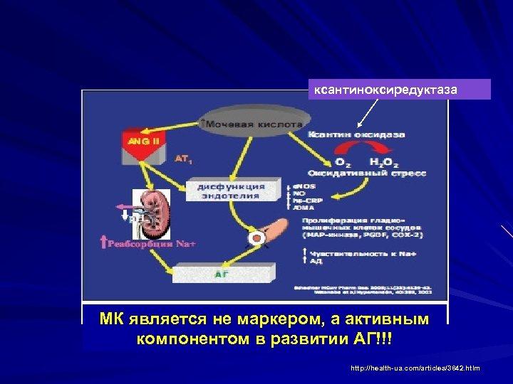 ксантиноксиредуктаза МК является не маркером, а активным компонентом в развитии АГ!!! http: //health-ua. com/articles/3842.