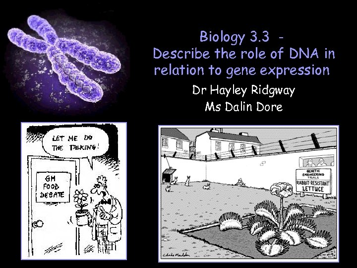 Biology 3. 3 Describe the role of DNA in relation to gene expression Dr