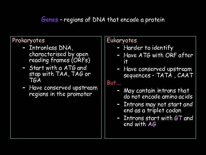 Genes – regions of DNA that encode a protein Prokaryotes – Intronless DNA, characterised
