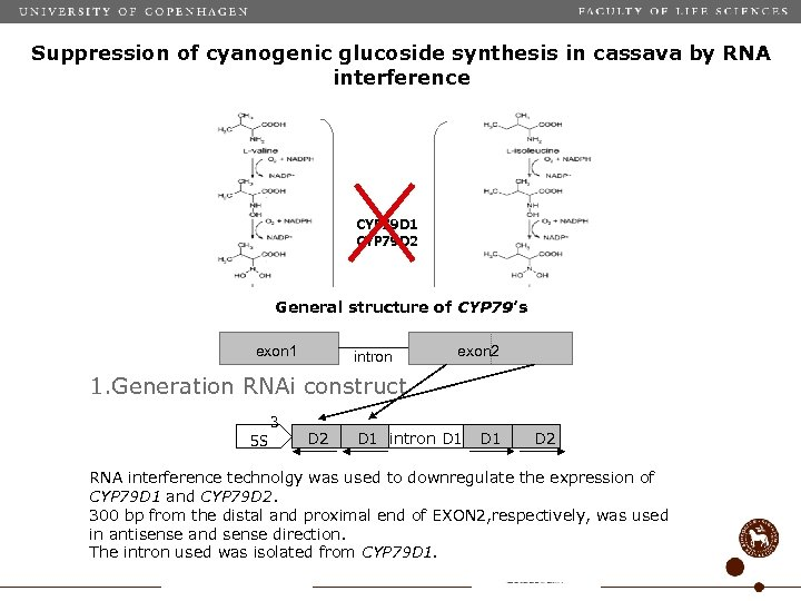 Suppression of cyanogenic glucoside synthesis in cassava by RNA interference CYP 79 D 1