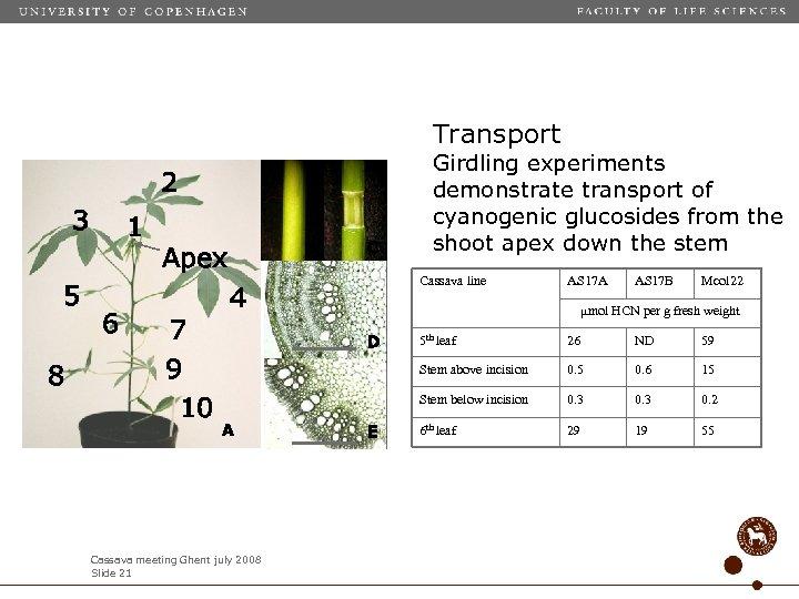Transport 2 3 5 8 1 6 B Apex 7 9 10 C Girdling