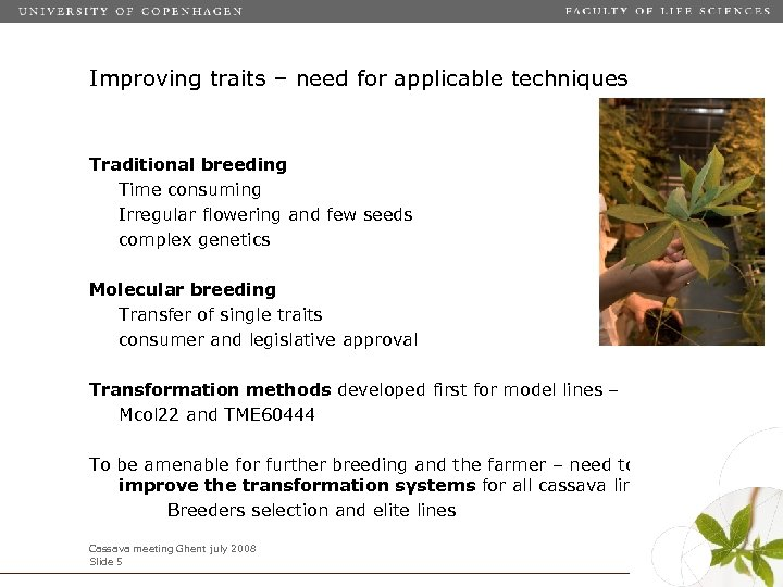 Improving traits – need for applicable techniques Traditional breeding Time consuming Irregular flowering and