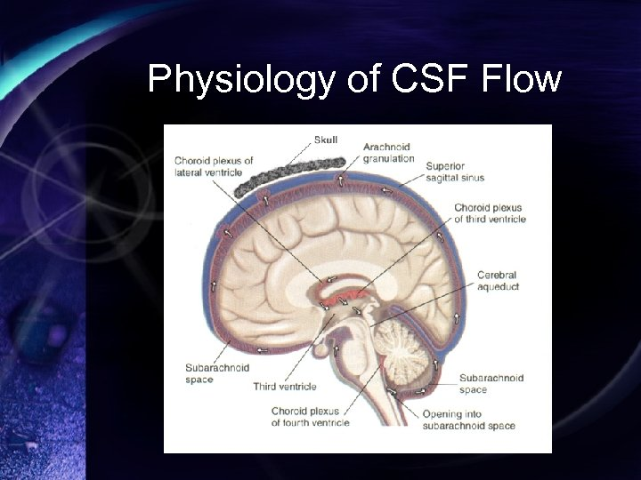 Physiology of CSF Flow
