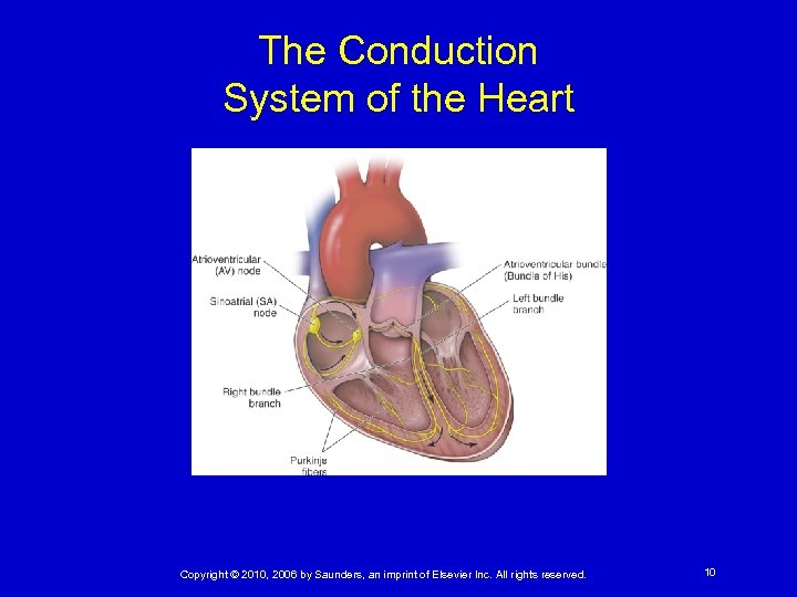 The Conduction System of the Heart Copyright © 2010, 2006 by Saunders, an imprint