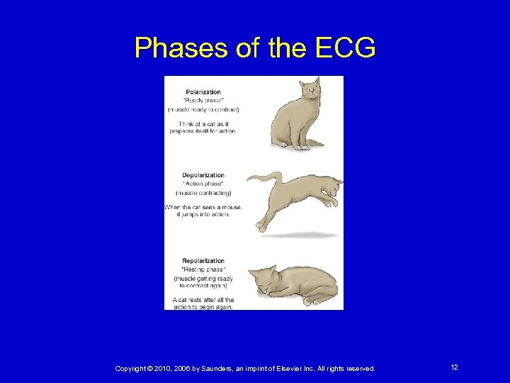 Phases of the ECG Copyright © 2010, 2006 by Saunders, an imprint of Elsevier