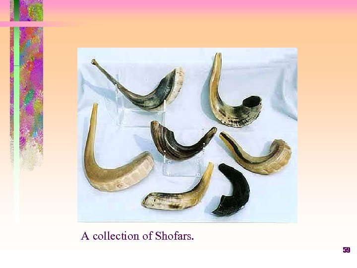 A collection of Shofars. 59