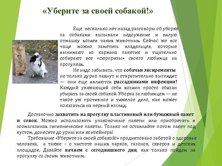 «Уберите за своей собакой!» Еще несколько лет назад разговоры об уборке за собаками