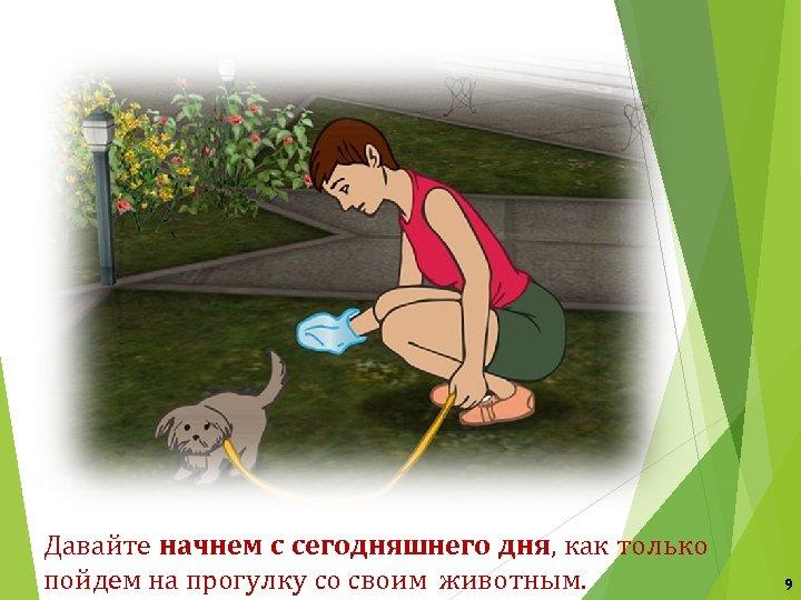 Давайте начнем с сегодняшнего дня, как только пойдем на прогулку со своим животным. 9
