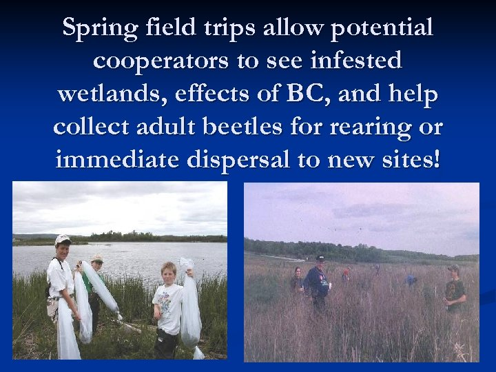 Spring field trips allow potential cooperators to see infested wetlands, effects of BC, and