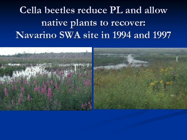 Cella beetles reduce PL and allow native plants to recover: Navarino SWA site in