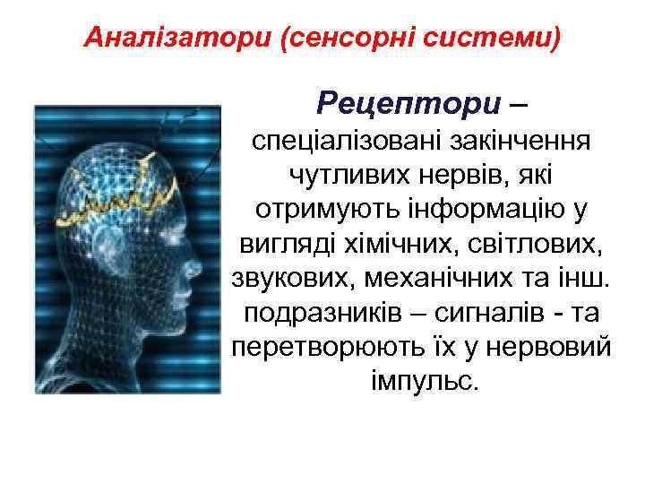 Аналізатори (сенсорні системи) Рецептори – спеціалізовані закінчення чутливих нервів, які отримують інформацію у вигляді