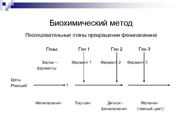 Биохимический метод Последовательные этапы превращения фенилаланина Гены: Ген 1 Белки – ферменты Цепь Реакций