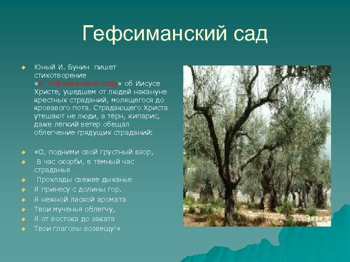 Гефсиманский сад u Юный И. Бунин пишет стихотворение «В Гефсиманском саду» об Иисусе Христе,