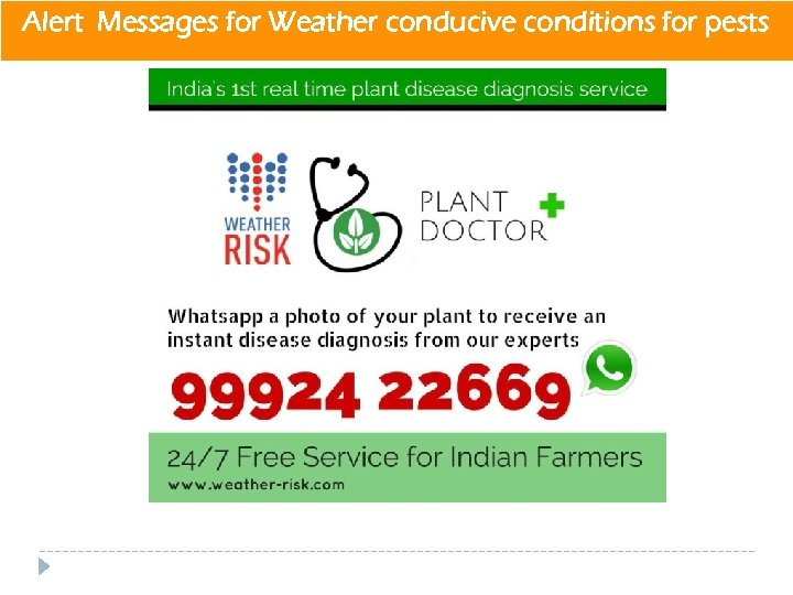 Alert Messages for Weather conducive conditions for pests