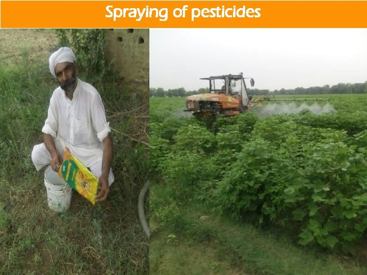Spraying of pesticides by AFS team Spraying of pesticides