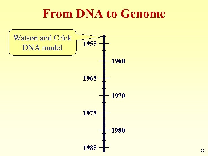From DNA to Genome Watson and Crick DNA model 1955 1960 1965 1970 1975