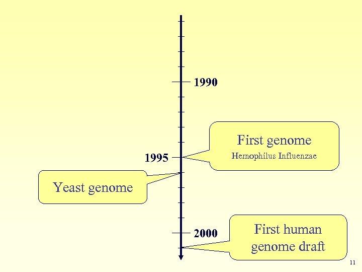 1990 First genome Hemophilus Influenzae 1995 Yeast genome 2000 First human genome draft 11