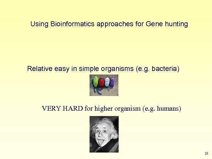 Using Bioinformatics approaches for Gene hunting Relative easy in simple organisms (e. g. bacteria)