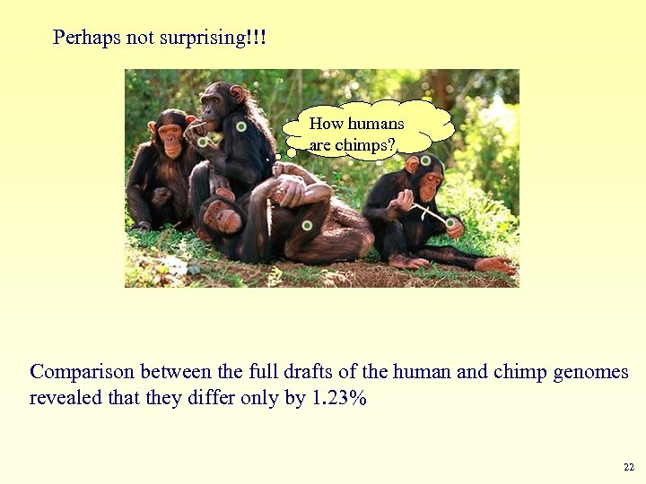 Perhaps not surprising!!! How humans are chimps? Comparison between the full drafts of the