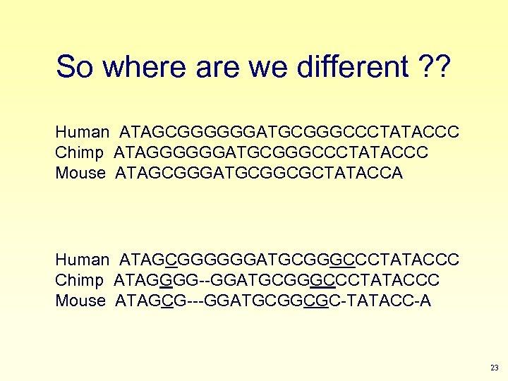 So where are we different ? ? Human ATAGCGGGGGGATGCGGGCCCTATACCC Chimp ATAGGGGGGATGCGGGCCCTATACCC Mouse ATAGCGGGATGCGGCGCTATACCA Human