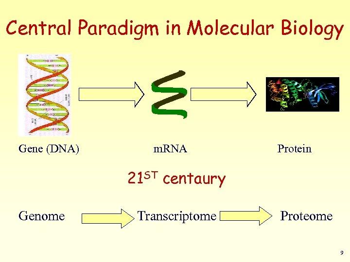 Central Paradigm in Molecular Biology Gene (DNA) m. RNA Protein 21 ST centaury Genome