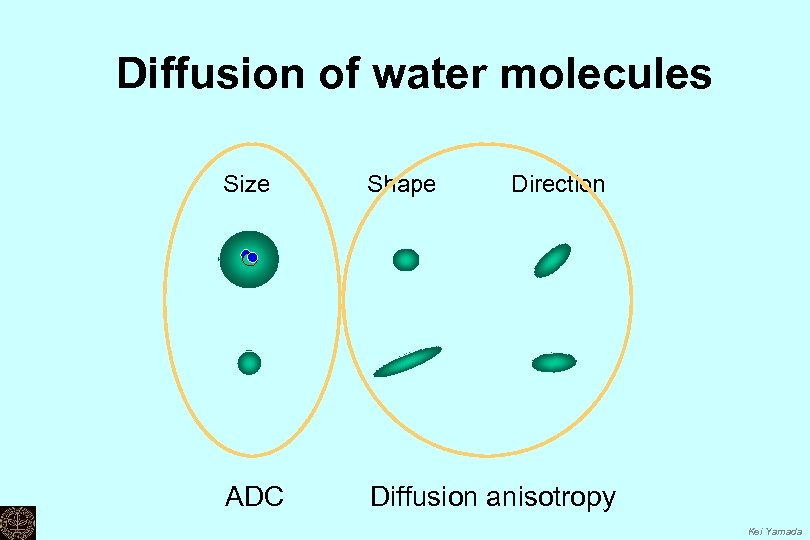 Diffusion of water molecules Size Shape Direction ADC Diffusion anisotropy Kei Yamada
