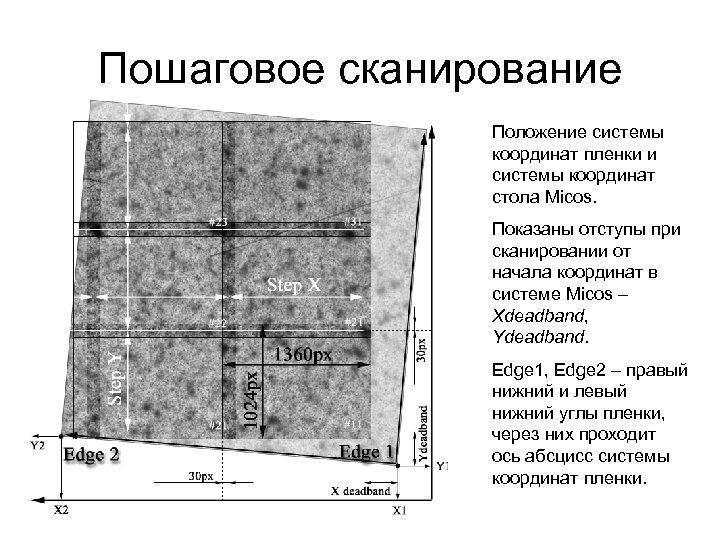 Пошаговое сканирование Положение системы координат пленки и системы координат стола Micos. Показаны отступы при
