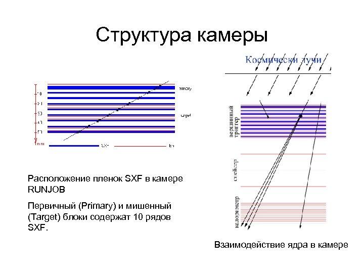 Структура камеры Расположение пленок SXF в камере RUNJOB Первичный (Primary) и мишенный (Target) блоки