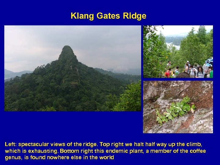 Klang Gates Ridge Left: spectacular views of the ridge. Top right we halt half