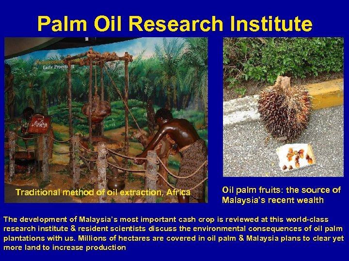 Palm Oil Research Institute Traditional method of oil extraction, Africa Oil palm fruits: the