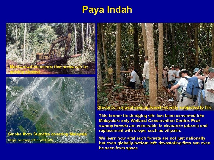 Paya Indah Mechanisation means that areas can be quickly cleared Students in a peat