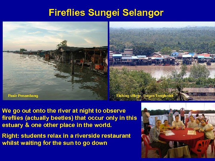 Fireflies Sungei Selangor Pasir Penambang Fishing village, Bagan Tengkorak We go out onto the