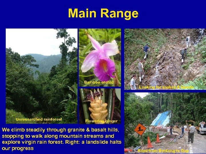 Main Range Bamboo orchid Looking for snakes & lizards Unresearched rainforest Flowering ginger We